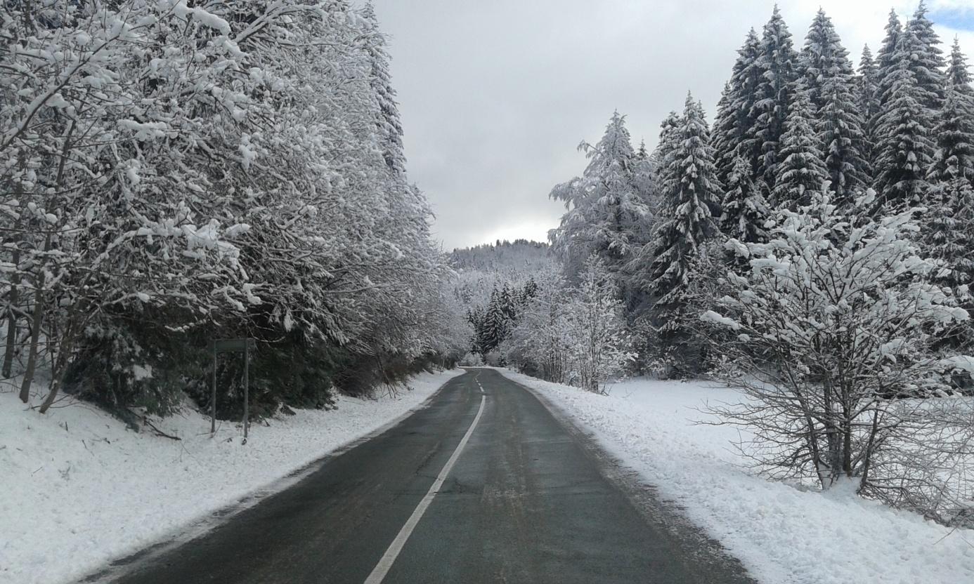Cesta od Jasenka kod skretanja za Begovu stazu (foto: Damir Janton)