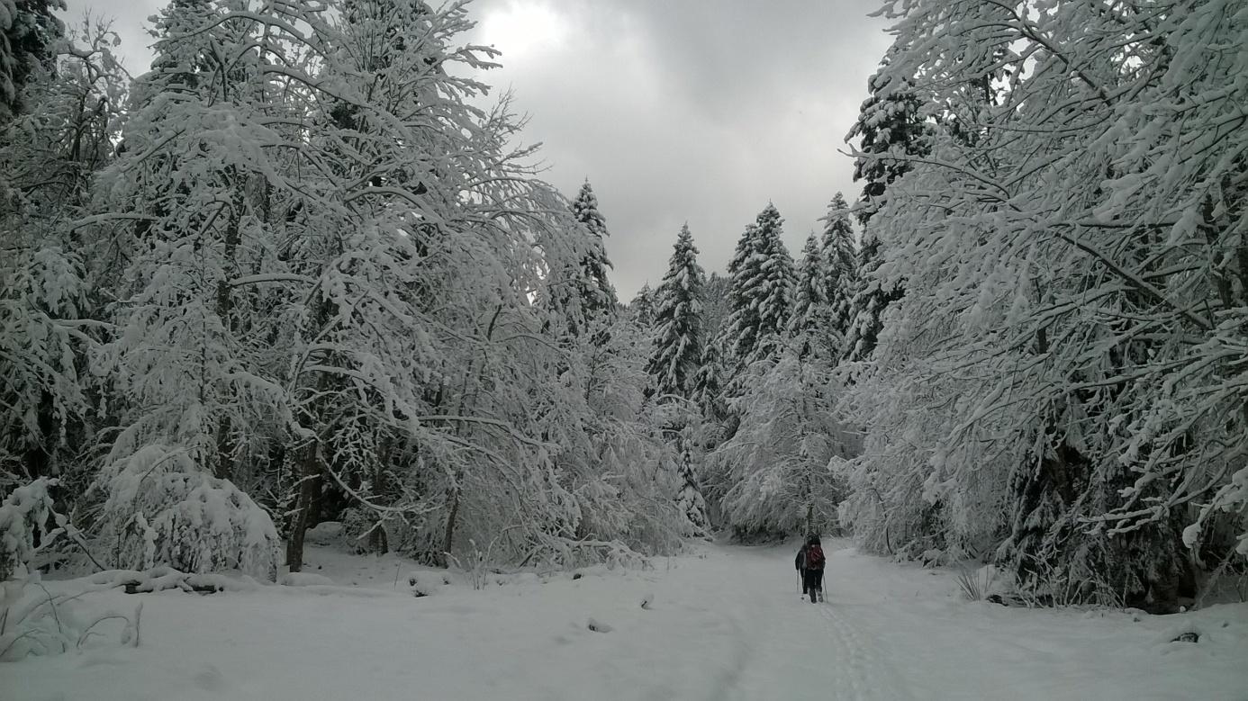 Begova staza pod snijegom (foto: Tomislav Kurečić)